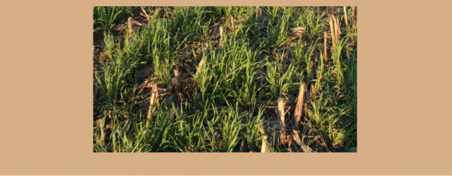 Cover crops can improve soil organic matter, reduce over-winter and early spring erosion, scavenge nutrients, and combat weeds.  The suggested types of plants to use depend on what your goals […]