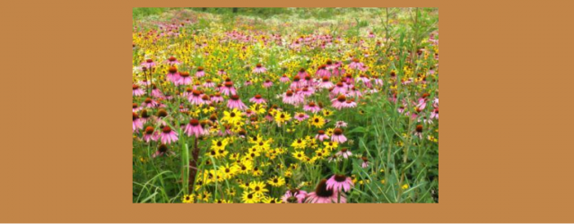 At the November 13, 2015 meeting of the Allamakee SWCD commissioners,apolicy was established regarding the approval of plans forspecific Continuous CRP practices that include CP33-Habitat Buffers for Upland Birds, CP42-Pollinator […]