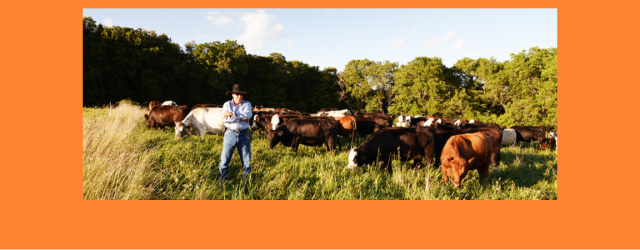 Allamakee SWCD & Northeast Iowa RC&D to Sponsor Grassfed Field Day Feb 27th Local livestock producers and statewide and regional organizations are teaming up to host a field day on […]