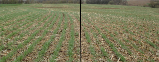 Cover crops are starting to become more popular in Iowa due to their ability to protect the soil and recycle nutrients that would otherwise be lost to leaching during winter […]