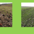 With increasing interest in cover crops in recent years, there is also increased discussion about how best to fit cover crops into each system.  One issue to address is cover […]