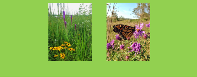 Pheasants Forever will be hosting several field days in the area during National Pollinator Week. The tours will look at native plantings and discuss management options and challenges. This is […]