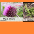 There are a lot of unwanted shrubs, trees, and weeds that grow up on properties. It can be difficult to stay ahead of them, especially on ground that you may […]