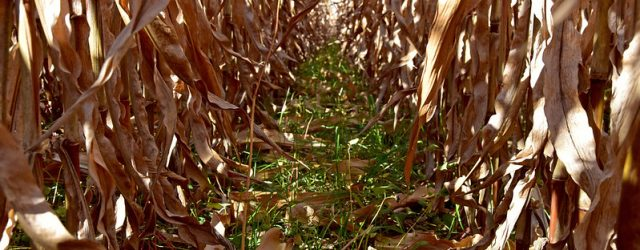 by Jason Johnson, Iowa NRCS State Public Affairs SpecialistNovember 2020 After years of struggling to consistently establish cover crops in the fall on cropland in Iowa's northern tier counties, more […]
